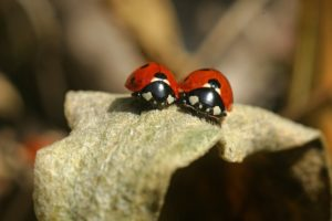 3 Bugs You Want in Your Garden